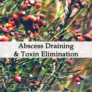 Herbal Medicine for Abscess Draining & Toxin Elimination