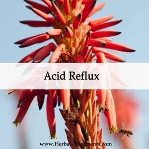 Herbal Medicine for Acid Reflux