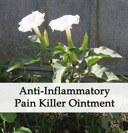 Herbal Anti-Inflammatory, Pain Reliever Ointment