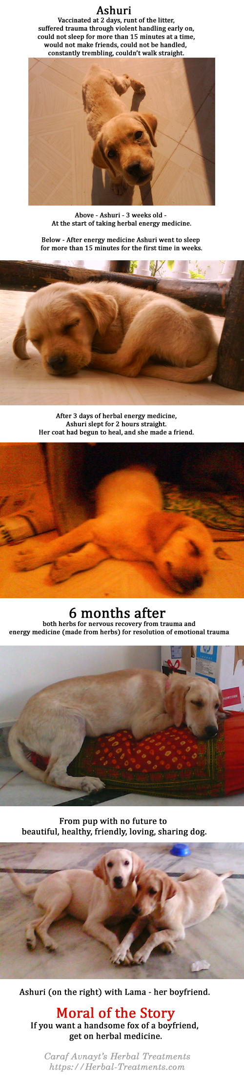 Ashuri - Rescue pup recovery from trauma, growth retardation