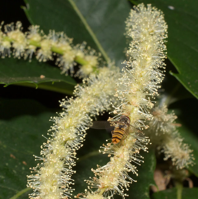 How Bach Flower Sweet Chestnut supports natural healing