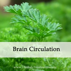 Herbal Medicine for Brain Circulation