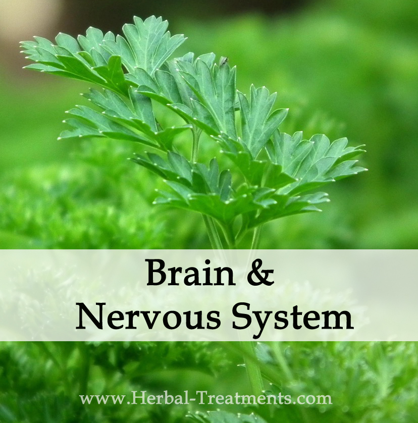 Herbal Treatments for Brain and Nervous Conditions