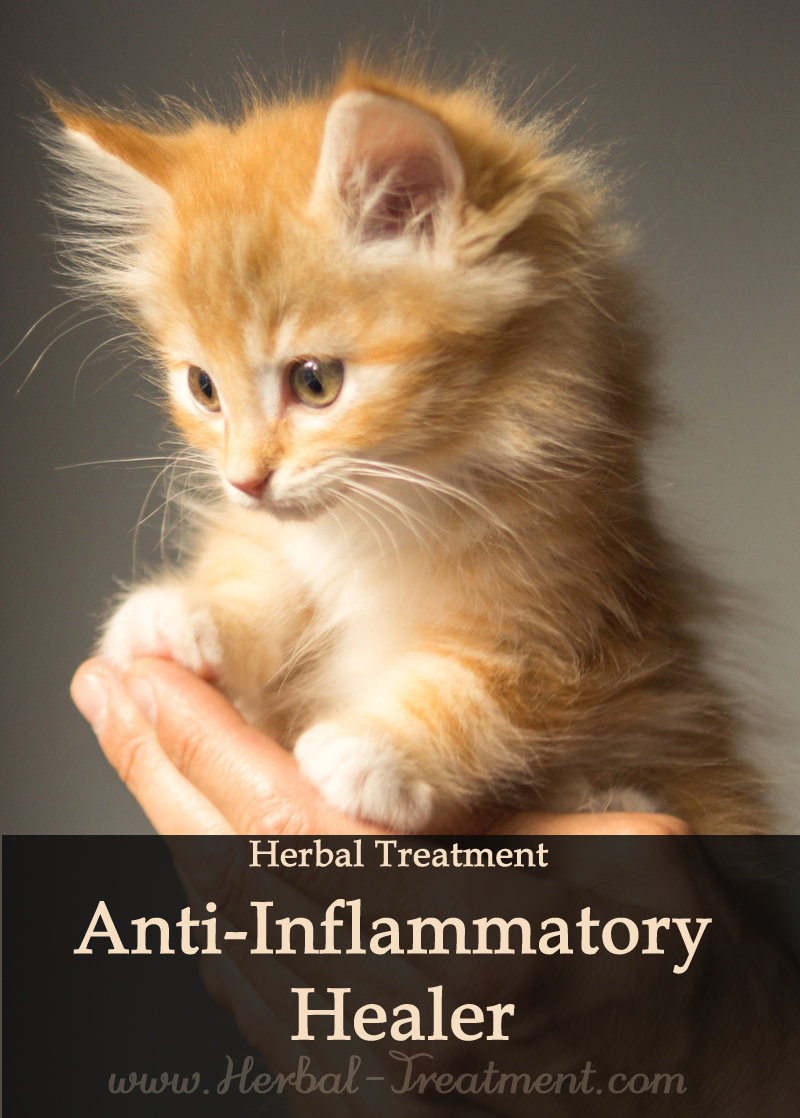 Anti Inflammatory Healer For Cats Caraf Avnayt S Herbal