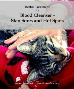 Herbal Treatment for Blood Cleanser - Skin Sores and Hot Spots in Cats