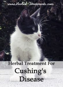 Herbal Treatment for Cushing's Disease in Cats