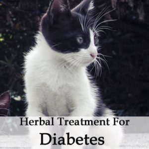 Herbal Treatment for Diabetes in Cats