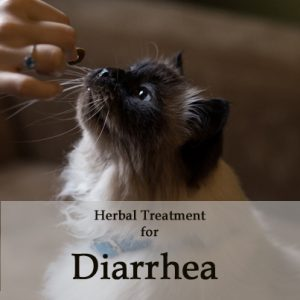Herbal Treatment for Diarrhea in Cats