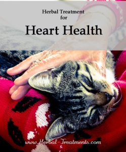 Herbal Treatment for Heart Health in Cats