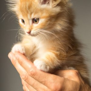 Herbal Treatments for Feline Immunity and Infection Treatment