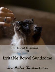 Herbal Treatment for Irritable Bowel Disease in Cats