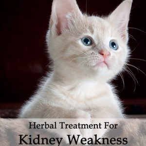 Herbal Treatment for Kidney Weakness in Cats