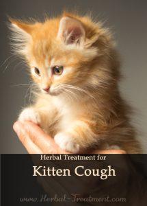 Herbal Treatment for Kitten Cough