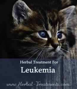 Herbal Treatment for Cancer - Leukaemia in Cats