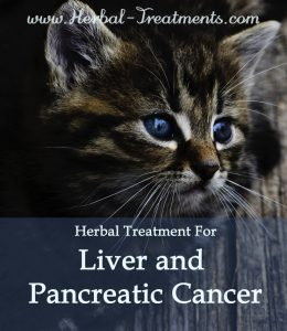 Herbal Treatment for Cancer - Liver and Pancreatic Cancer in Cats