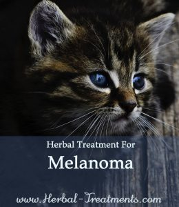 Herbal Treatment for Cancer- Melanoma Concentrate Spray for Cats
