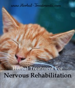 Herbal Treatment for Nervous Rehabilitation in Cats