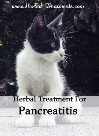 Herbal Treatment for Pancreatitis in Cats