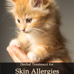 Herbal Treatment for Skin Allergies in Cats