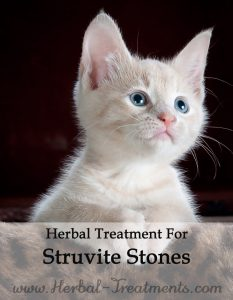 Herbal Treatment for Struvite Stones in Cats