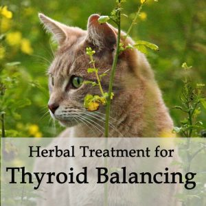 Herbal Treatment for Thyroid Balancing in Cats