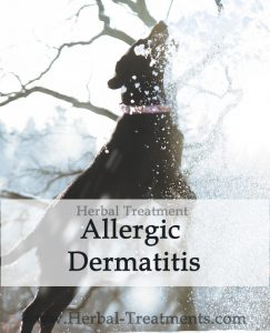 Herbal Treatment for Allergic Dermatitis in Dogs