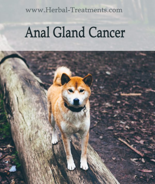 Herbal Treatment For Anal Gland Cancer in Dogs