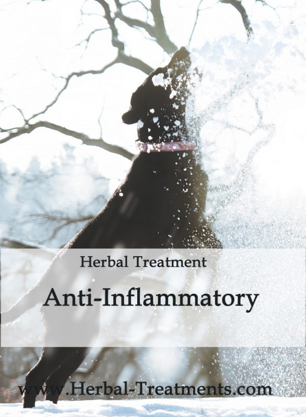 Herbal Treatment - Anti-Inflammatory in Dogs