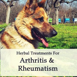 Arthritis and Rheumatism in Dogs