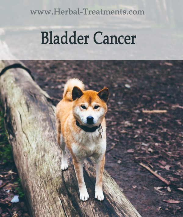 Herbal Treatment For Bladder Cancer in Dogs