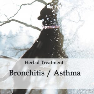 Herbal Treatment for Bronchitis / Asthma in Dogs