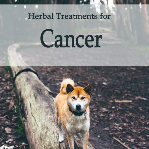 Herbal Treatments for Canine Cancer