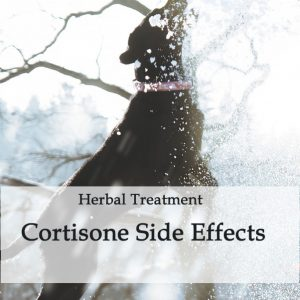 Herbal Treatment for Cortisone Side Effects in Dogs