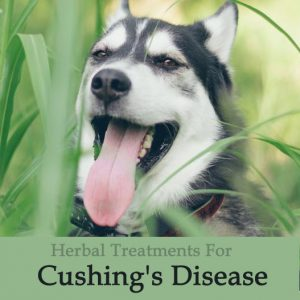 Herbal Treatment for Cushing's Disease in Dogs