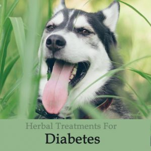 images How to Diagnose Liver Disease in Older Dogs