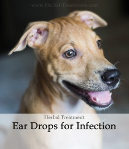 Herbal Treatment - Infection Fighting Ear Drops for Dogs