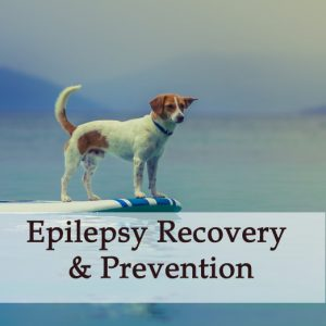 Herbal Treatment for Epilepsy Recovery & Seizure Prevention in Dogs