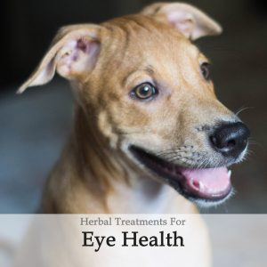 Eye Health / Circulation Herbal Tonic for Dogs