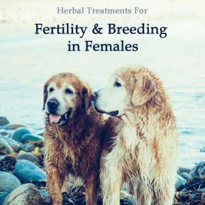 Herbal Treatment For Fertility and Breeding Support - Female - in Dogs