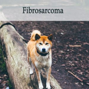 Herbal Treatment for Cancer - Fibrosarcoma in Dogs