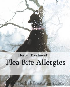 Herbal Treatment for Flea Bite Allergies in Dogs