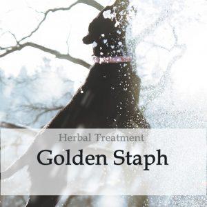 Golden Staph Herbal Tonic for Dogs