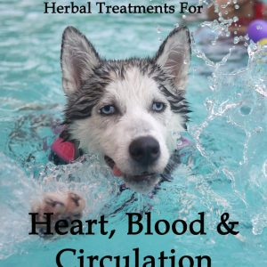 Herbal Treatments for Canine Heart, Blood and Circulatory Conditions