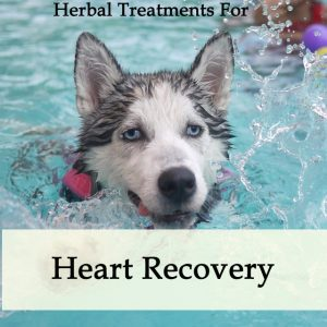 Herbal Treatment for Heart Recovery in Dogs