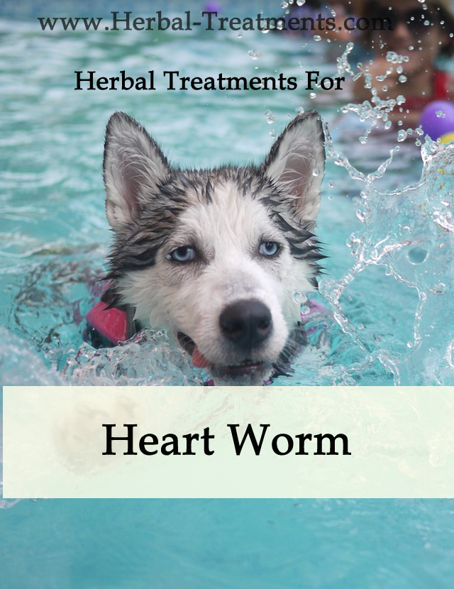 Herbal Treatment for Heartworm in Dogs