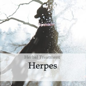 Herbal Treatment for Herpes Virus in Dogs