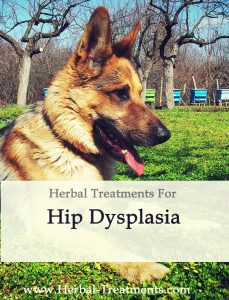 Herbal Treatment for Hip Dysplasia in Dogs