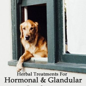 Herbal Treatments for Canine Hormonal and Glandular Conditions