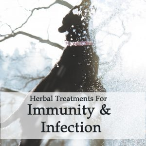 Herbal Treatments for Canine Immunity and Infection Treatment