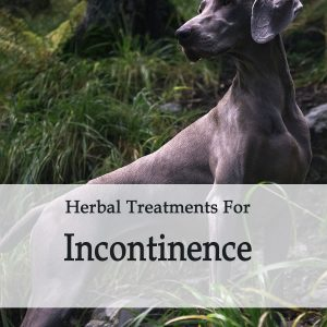Herbal Treatment For Incontinence in Dogs